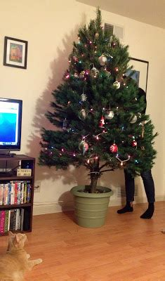how to stand a real christmas tree the modern diy diy tree stand