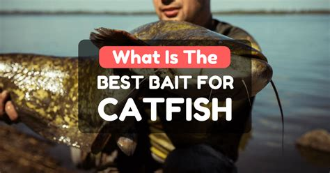 bait  catfish