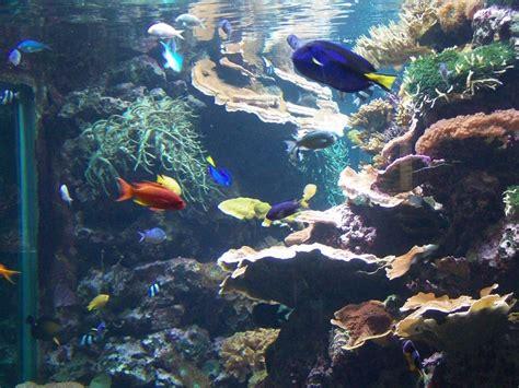 """Bild """"riffaquarium"""" Zu Aquarium (zoologischer Garten) In"""