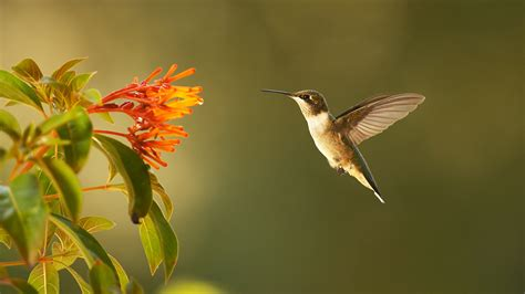 video s35 ep1 super hummingbirds preview watch