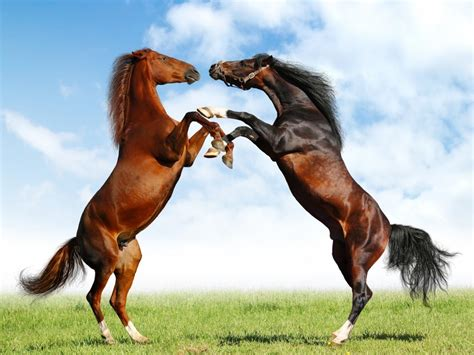 horses long tail animal animals running horse wallpapers snow cute hores pony fight brown fighting hourse wild ponies foto amazing