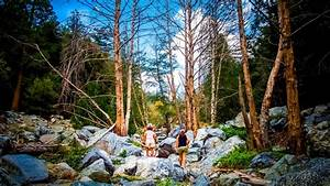 Icehouse Canyon Trail Is The Best The Shady Forest Hike In