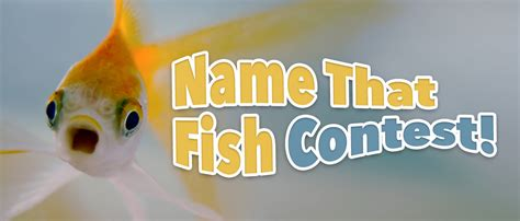 Contest  Name That Fish