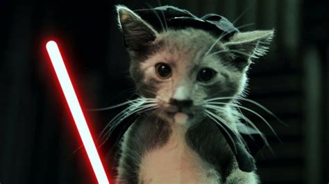 Katze Darth Vader by Katze Hund Co Goes Wars