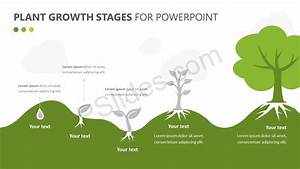 Plant Growth Stages Diagram For Powerpoint