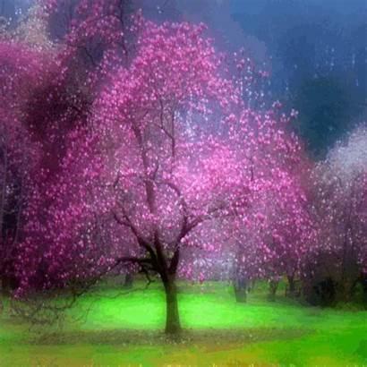 Spring Anime Landscape Animated Tree Jardin Arbre