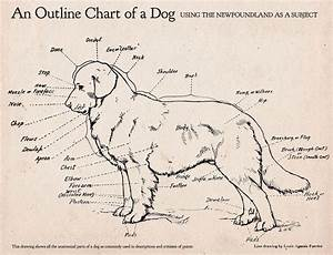 Here U0026 39 S An Awesome Dog Anatomy Diagram