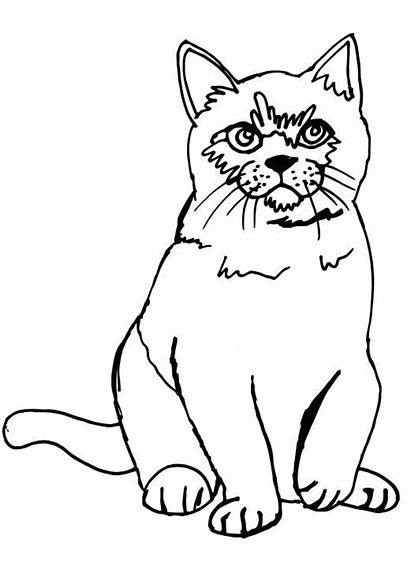 Coloring Cat Pages Printable Fat Fluffy Sitting