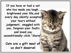 quotes about cats cat lover quotes quotesgram