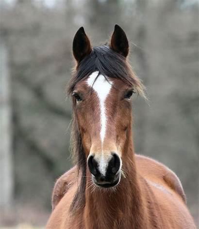 Horse Eye Google Head Horses Cavalo Irresponsibility