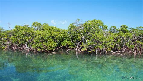 Forests By The Sea (Mangrove Deforestation)