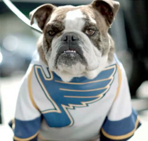 hockey dog   st louis blues jersey  hockeygods