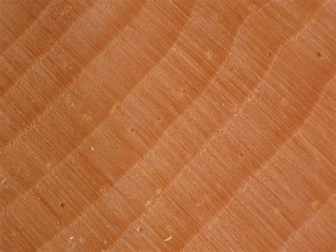 wood  grain  evergreen softwoods