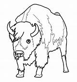 Bison Coloring Pages Buffalo Animal Coloriage Bill Dessin Bills Bullet Colorier Imprimer Printable Animaux Animals Nord American Et Sheets Pour sketch template