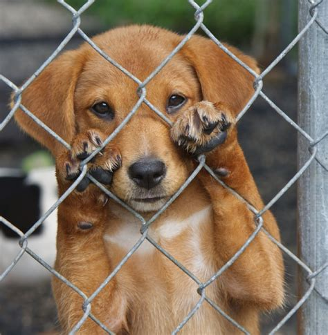International Homeless Animals Day: Become Part of the ...