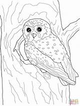 Owl Coloring Elf Flying Realistic Snowy Printable Adults Template Owls Adult Supercoloring Templates Kid Third Grade Categories Drawing sketch template