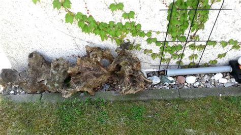 Ratten Im Garten Youtube