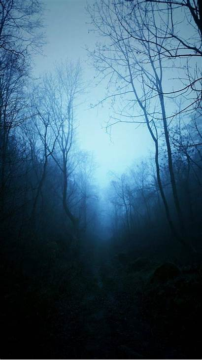Dark Forest Nature Mist Trees Tropical Tree