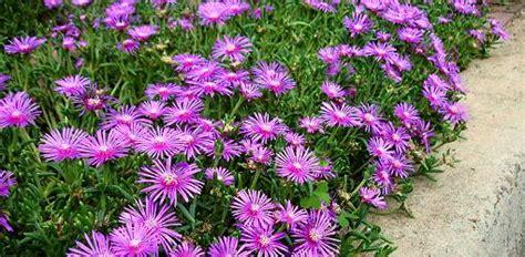 Perennial Flower Garden Basics