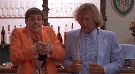 dumb and dumber owl gif find share on giphy