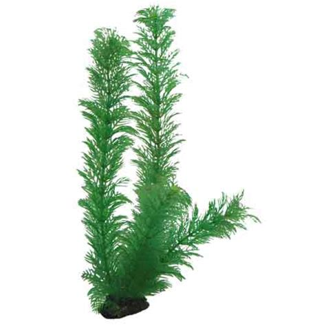 hobby egeria 34cm plante artificielle pour aquarium d 233 corations pour aquarium plantes