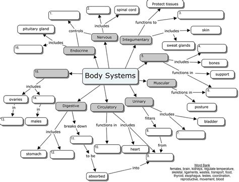 Body Systems Concept Map  Maps!!! And Social Studies  Pinterest  Human Body Systems, Body