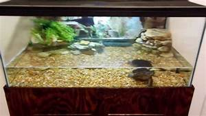 Snapping turtle tank setup - YouTube