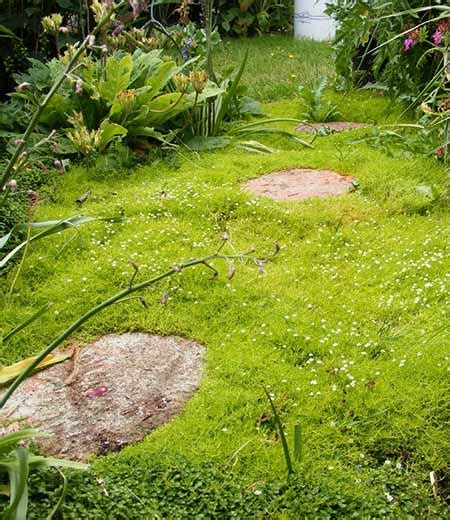How To Grow Grass In Backyard by 12 Amazing Stepable Plants Mental Scoop