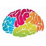 Brain Transparent