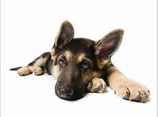 Redewendung Auf den Hund kommen [GEOLINO]