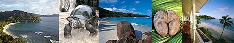 cuisine seychelloise les seychelles cuisine des seychelles recettes