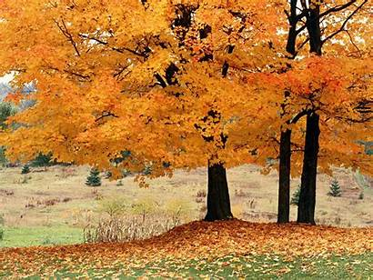 Trees Wallpapers Backgrounds Tag