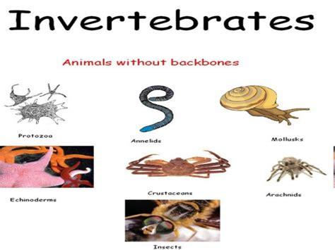 invertebrates grade vertebrates science features nine primary slide change