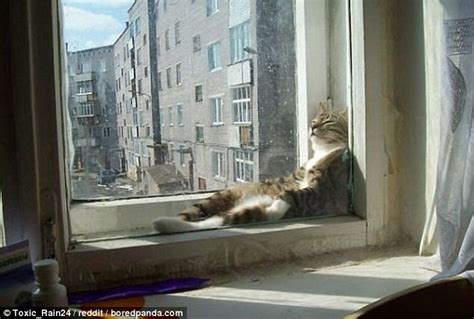 boredpands  prove   cats love  sunshine