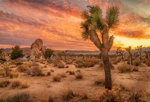 Scenery Photography Backdrops Desert In Sunset Landscape Background Sale