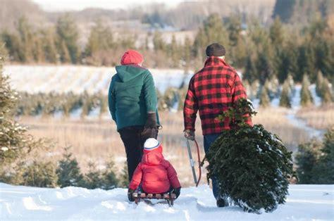 christmas tree farm somerset nj st croix valley trees family friendly tree farm