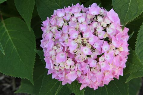 flower kinds with pictures types of flowers with pictures and names beautiful flowers