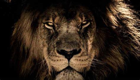 O Que Significa Leão Da Tribo De Judá? Quem é O Leão De Judá?