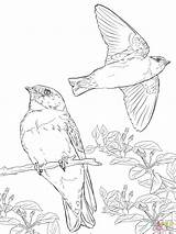 Coloring Realistic Swallows Swallow Cliff Pages Tree Supercoloring Printable Drawing Birds Barn Drawings Dot Vectors Paper 2048px 12kb 1536 sketch template