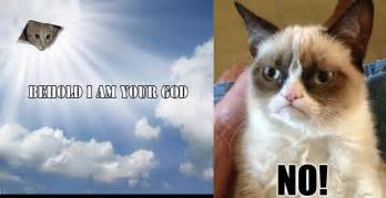Memes Vault Angry Cat ...