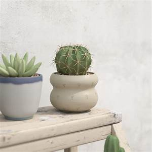 Collection Of Potted Cactus Plants 3D Model OBJ FBX MA MB ...