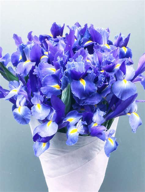 Blue Iris Bouquet Send Iris Online  Melbourne Flower