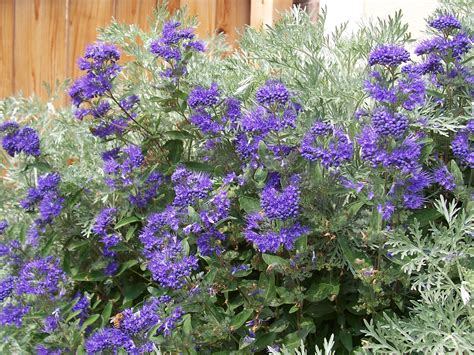 Pictures Of Flowering Shrubs For Landscaping Ideas
