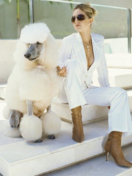 poodle coat clipping styles pets