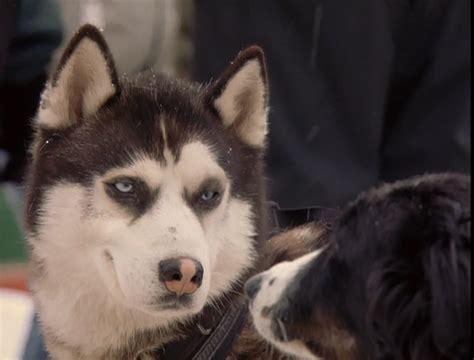 demon snow dogs photo  fanpop
