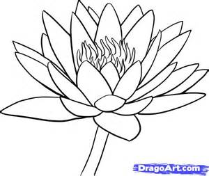 How to Draw Water Lily Drawings
