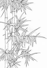 Bamboo Coloring Wash Ink Printable Drawing Oriental Colouring Drawings Watercolor Flowers Botanic Botanical Dessin Sketches Enregistree Depuis Plant Architecture Arte sketch template