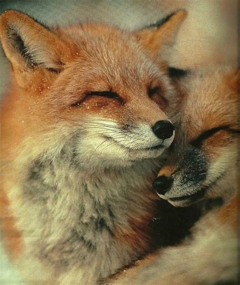 Best Images About Animals Hugging Cuddling