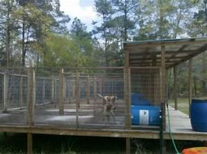8 best bears images on pinterest dog kennels dog crate With in ground dog house