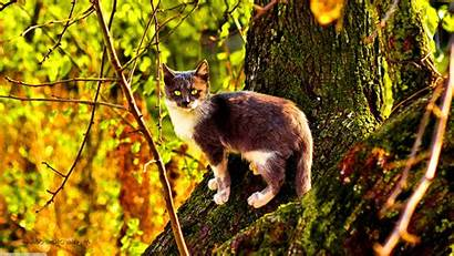 Cat Nature Animals Trees Moss Wallpapers Twigs